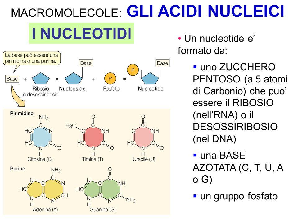 Metodi sperimentali classici per la risoluzione della struttura 3D: Come si può studiare la struttura di una proteina.