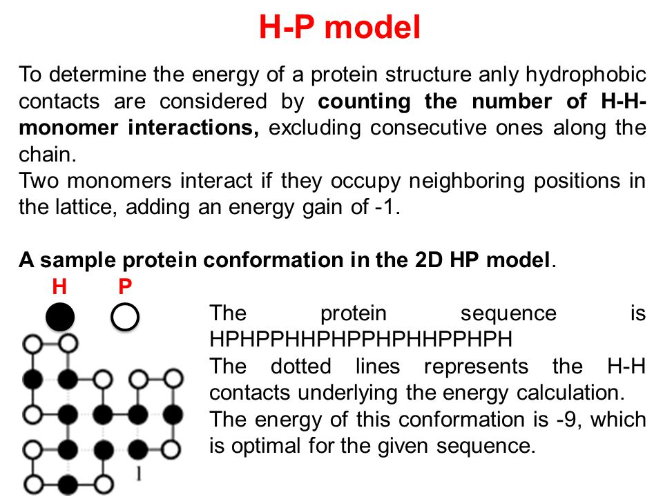 To determine the energy of a protein structure anly hydrophobic contacts are considered by counting the number of H-H- monomer interactions, excluding