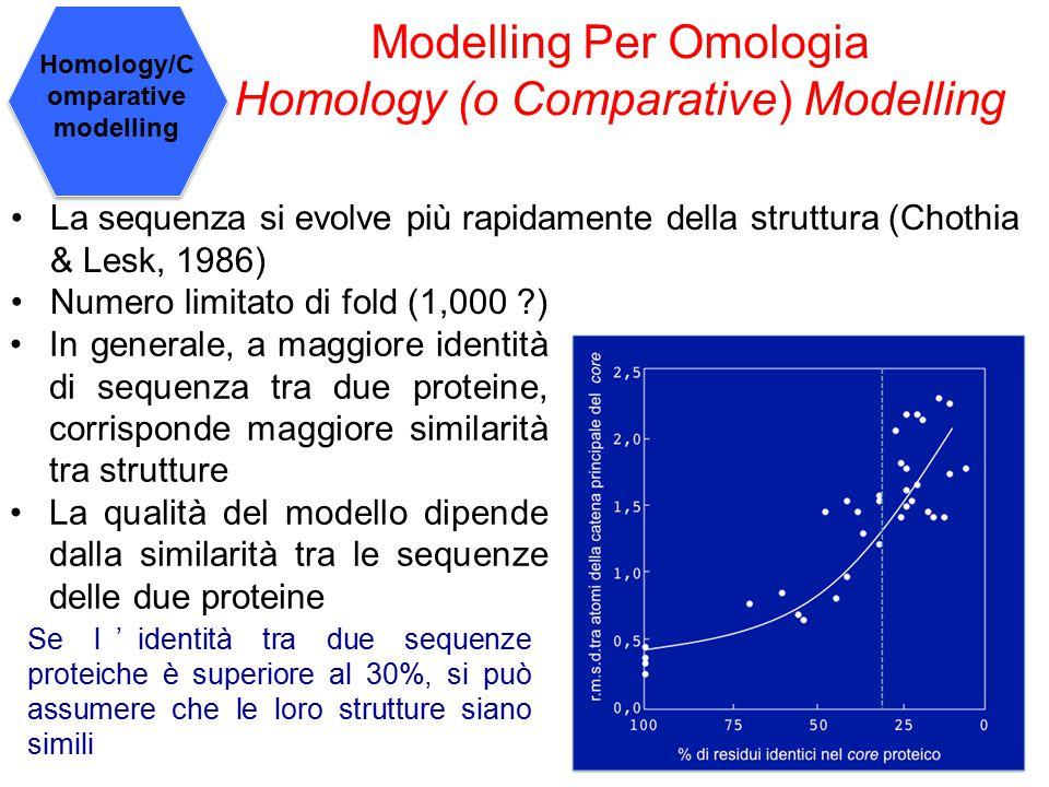 Modelling Per Omologia Homology (o Comparative) Modelling La sequenza si evolve più rapidamente della struttura (Chothia & Lesk, 1986) Numero limitato di fold (1,000 ?) In generale, a maggiore identità di sequenza tra due proteine, corrisponde maggiore similarità tra strutture La qualità del modello dipende dalla similarità tra le sequenze delle due proteine Se l'identità tra due sequenze proteiche è superiore al 30%, si può assumere che le loro strutture siano simili Homology/C omparative modelling