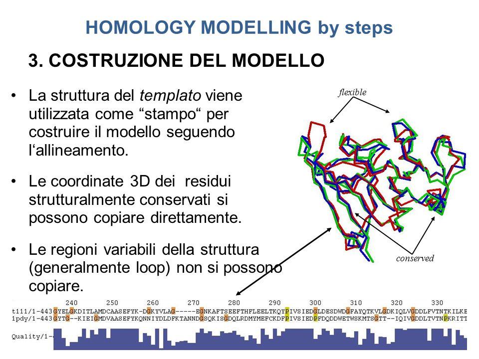 """La struttura del templato viene utilizzata come """"stampo"""" per costruire il modello seguendo l'allineamento. Le coordinate 3D dei residui strutturalment"""