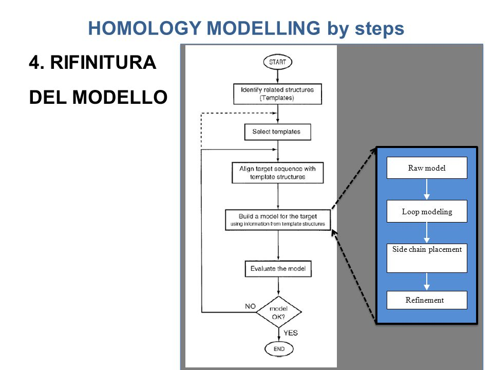 Raw model Loop modeling Side chain placement Refinement HOMOLOGY MODELLING by steps 4. RIFINITURA DEL MODELLO