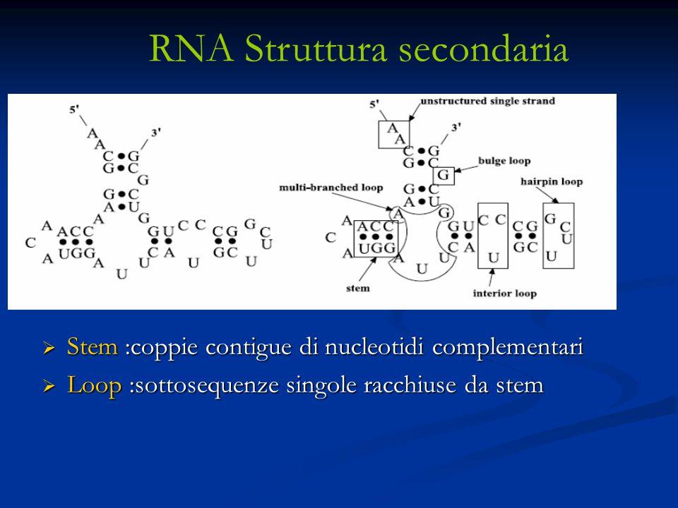 RNA Struttura secondaria  Stem :coppie contigue di nucleotidi complementari  Loop :sottosequenze singole racchiuse da stem