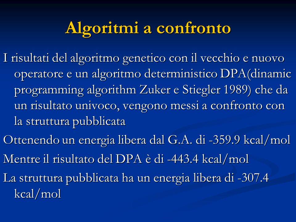 Algoritmi a confronto I risultati del algoritmo genetico con il vecchio e nuovo operatore e un algoritmo deterministico DPA(dinamic programming algorithm Zuker e Stiegler 1989) che da un risultato univoco, vengono messi a confronto con la struttura pubblicata Ottenendo un energia libera dal G.A.