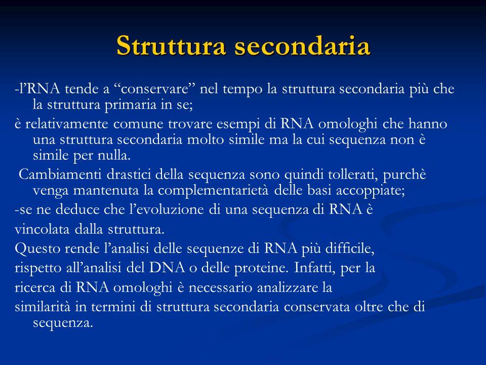 """Struttura secondaria -l'RNA tende a """"conservare"""" nel tempo la struttura secondaria più che la struttura primaria in se; è relativamente comune trovare"""