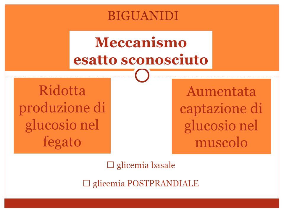 Ridotta produzione di glucosio nel fegato Aumentata captazione di glucosio nel muscolo Meccanismo esatto sconosciuto BIGUANIDI  glicemia basale  glicemia POSTPRANDIALE
