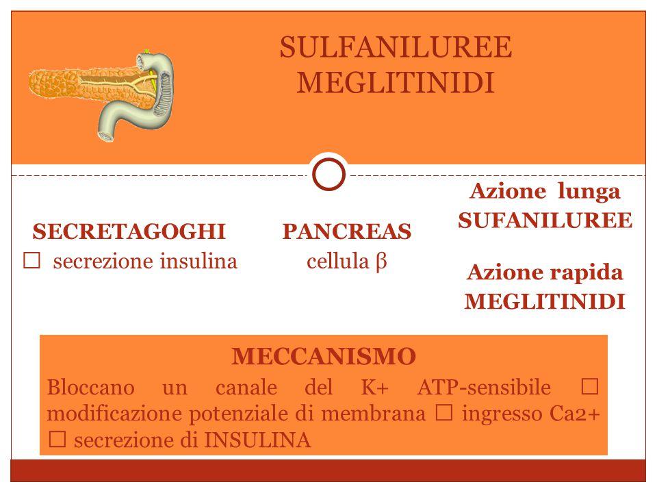 SECRETAGOGHI  secrezione insulina PANCREAS cellula β Azione lunga SUFANILUREE Azione rapida MEGLITINIDI SULFANILUREE MEGLITINIDI MECCANISMO Bloccano un canale del K+ ATP-sensibile  modificazione potenziale di membrana  ingresso Ca2+  secrezione di INSULINA