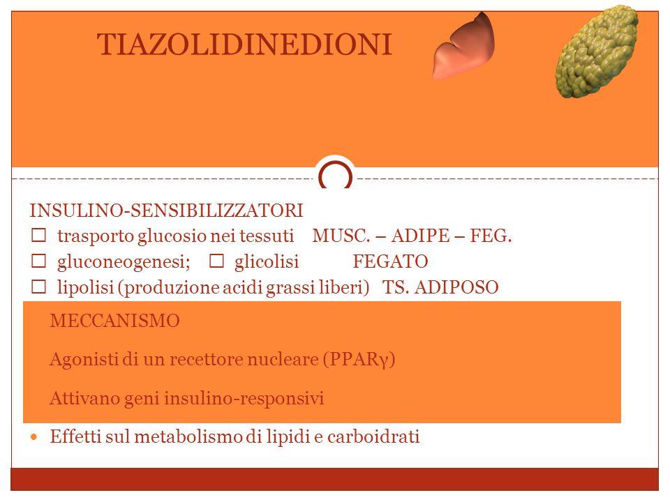 INSULINO-SENSIBILIZZATORI  trasporto glucosio nei tessuti MUSC.