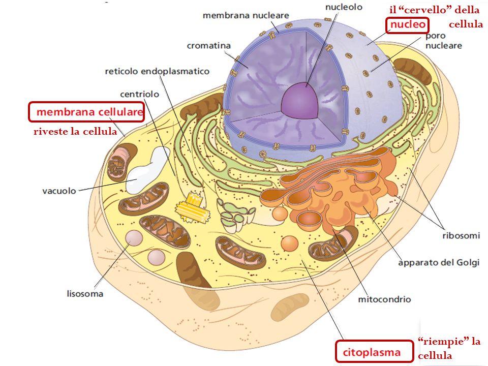 riveste la cellula riempie la cellula il cervello della cellula