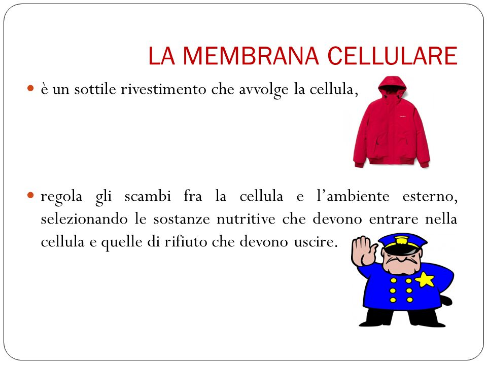 LA MEMBRANA CELLULARE è un sottile rivestimento che avvolge la cellula, regola gli scambi fra la cellula e l'ambiente esterno, selezionando le sostanze nutritive che devono entrare nella cellula e quelle di rifiuto che devono uscire.