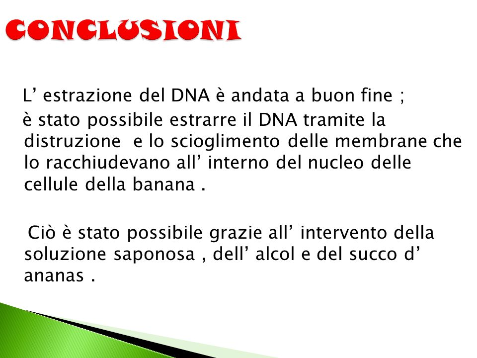 L' estrazione del DNA è andata a buon fine ; è stato possibile estrarre il DNA tramite la distruzione e lo scioglimento delle membrane che lo racchiudevano all' interno del nucleo delle cellule della banana.