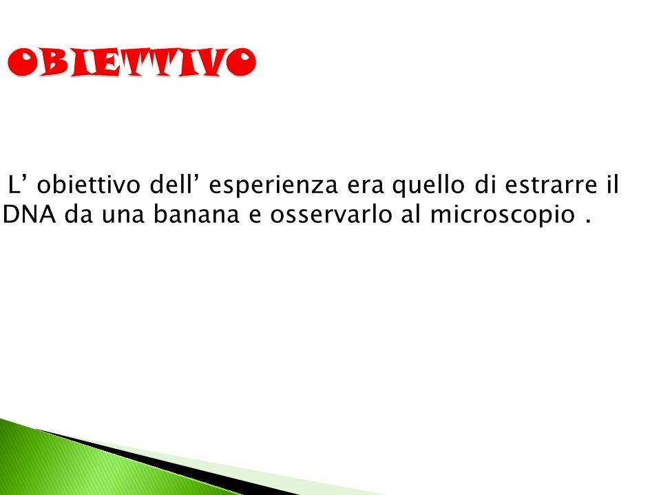 L' obiettivo dell' esperienza era quello di estrarre il DNA da una banana e osservarlo al microscopio.