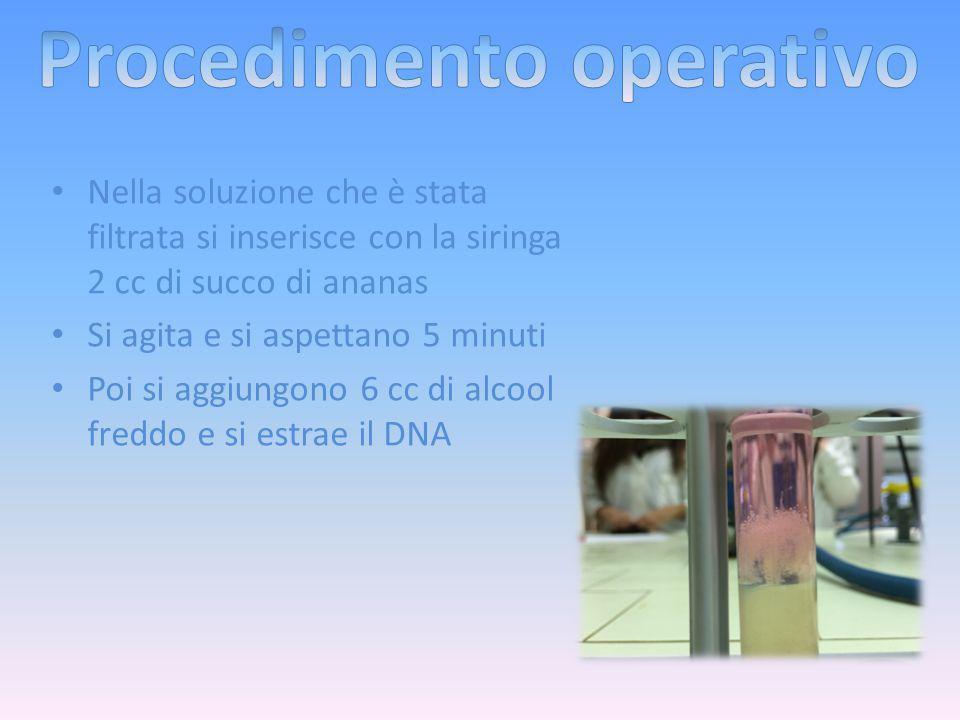 Nella soluzione che è stata filtrata si inserisce con la siringa 2 cc di succo di ananas Si agita e si aspettano 5 minuti Poi si aggiungono 6 cc di alcool freddo e si estrae il DNA