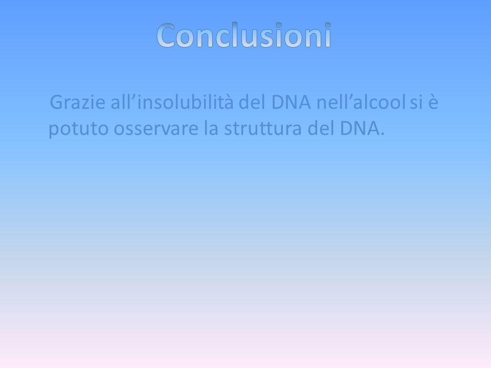 Grazie all'insolubilità del DNA nell'alcool si è potuto osservare la struttura del DNA.