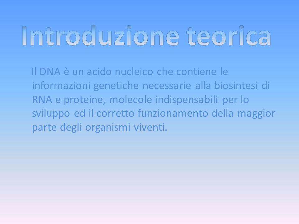Il DNA è un acido nucleico che contiene le informazioni genetiche necessarie alla biosintesi di RNA e proteine, molecole indispensabili per lo sviluppo ed il corretto funzionamento della maggior parte degli organismi viventi.
