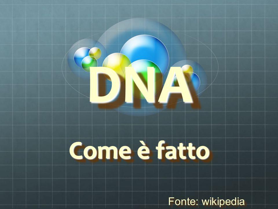 indiceindice Dove si trova Dove si trova Com'è fatto Com'è fatto Cromosomi e sesso Cromosomi e sesso Struttura Geni I cromosomi I cromosomi IlDNA nell'arte Il DNA nell'arte