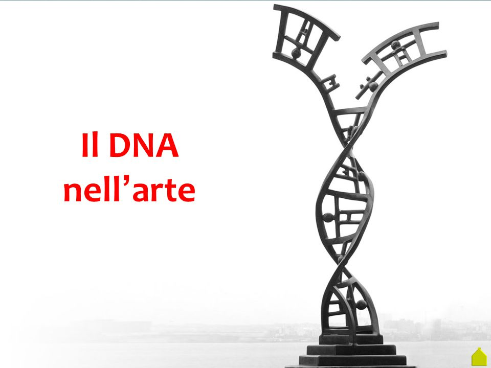 Il DNA nell ' arte