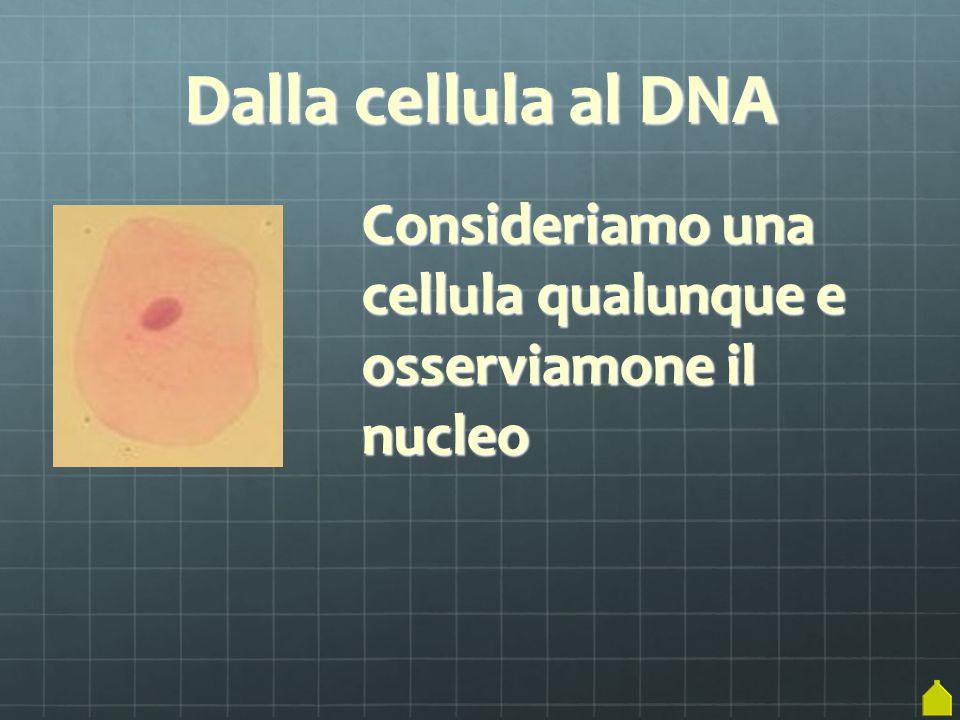 Se tagliamo la cellula, ne vediamo il contenuto nucleo (al microscopio elettronico, naturalmente!)