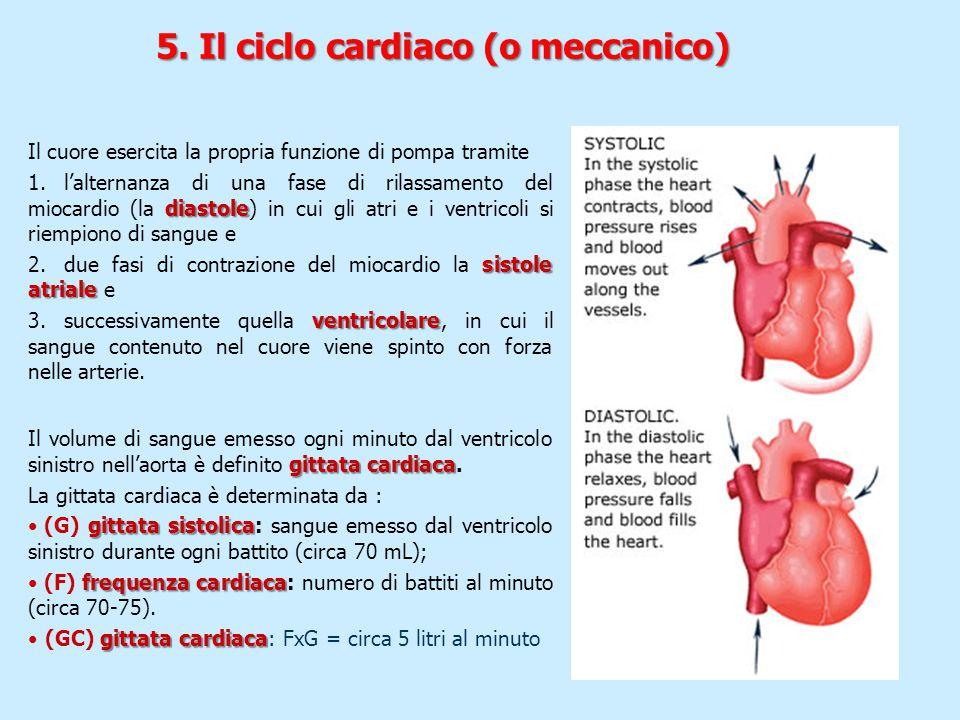 Il cuore esercita la propria funzione di pompa tramite diastole 1.l'alternanza di una fase di rilassamento del miocardio (la diastole) in cui gli atri