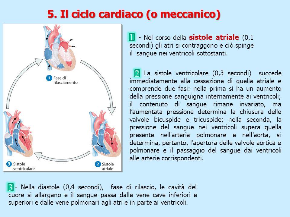 5. Il ciclo cardiaco (o meccanico) - La sistole ventricolare (0,3 secondi) succede immediatamente alla cessazione di quella atriale e comprende due fa