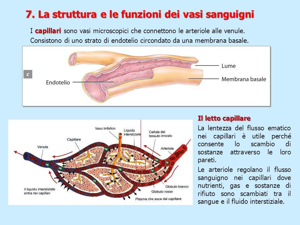 capillari I capillari sono vasi microscopici che connettono le arteriole alle venule. Consistono di uno strato di endotelio circondato da una membrana