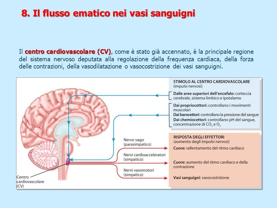 centro cardiovascolare (CV) Il centro cardiovascolare (CV), come è stato già accennato, è la principale regione del sistema nervoso deputata alla rego