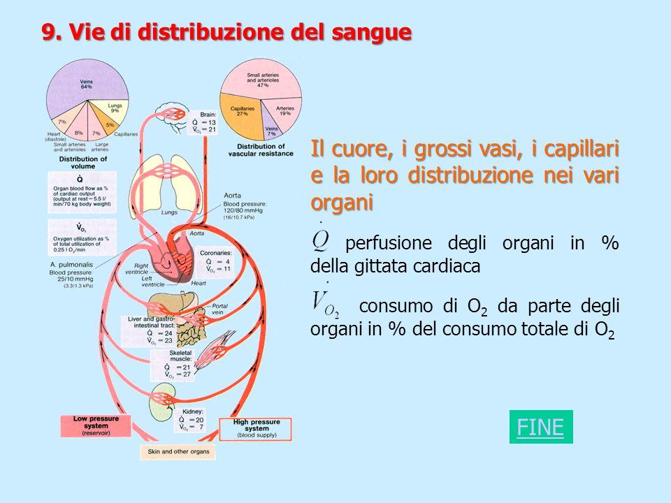 Il cuore, i grossi vasi, i capillari e la loro distribuzione nei vari organi perfusione degli organi in % della gittata cardiaca consumo di O 2 da par