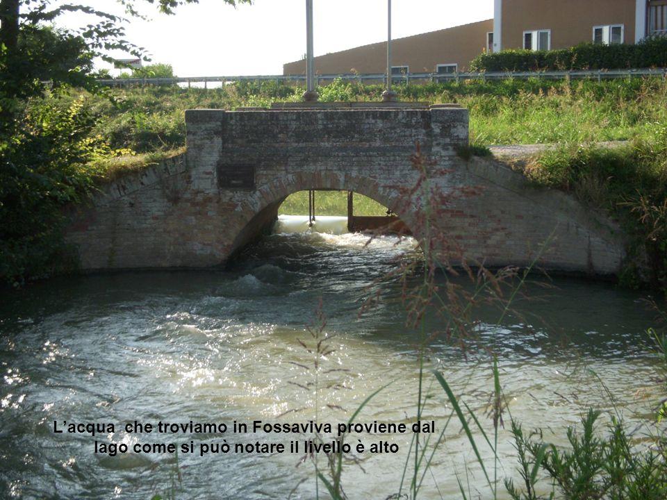 L'acqua che troviamo in Fossaviva proviene dal lago come si può notare il livello è alto