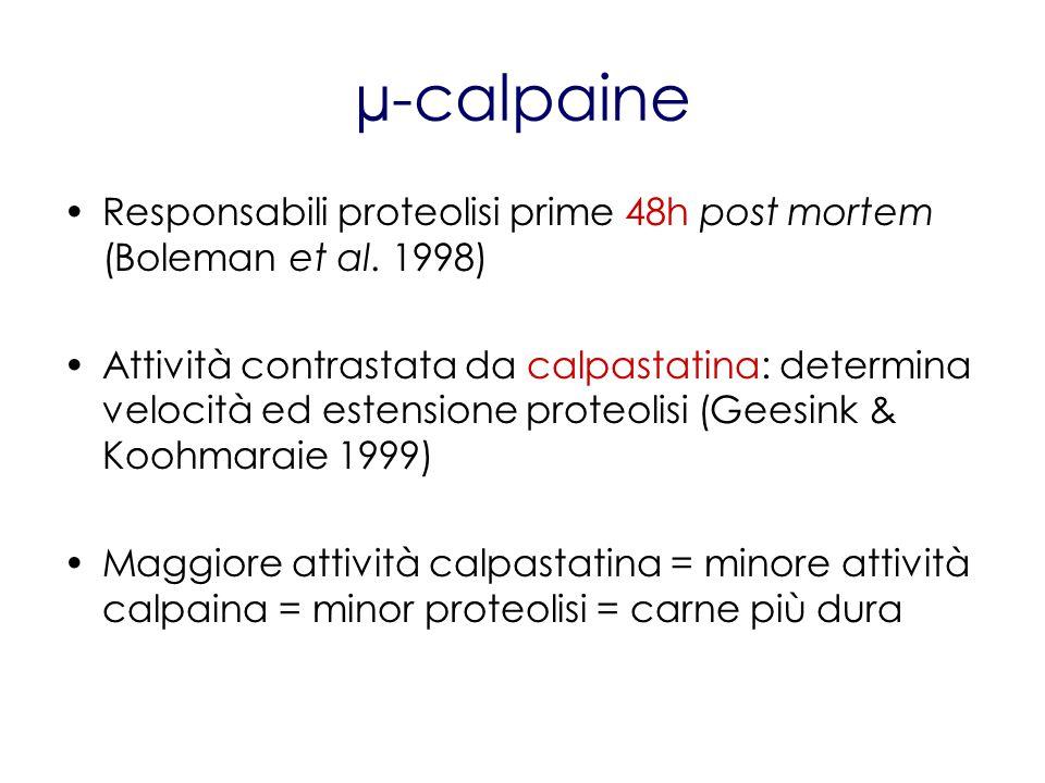 µ-calpaine Responsabili proteolisi prime 48h post mortem (Boleman et al. 1998) Attività contrastata da calpastatina: determina velocità ed estensione