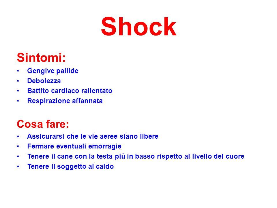 Shock Sintomi: Gengive pallide Debolezza Battito cardiaco rallentato Respirazione affannata Cosa fare: Assicurarsi che le vie aeree siano libere Ferma