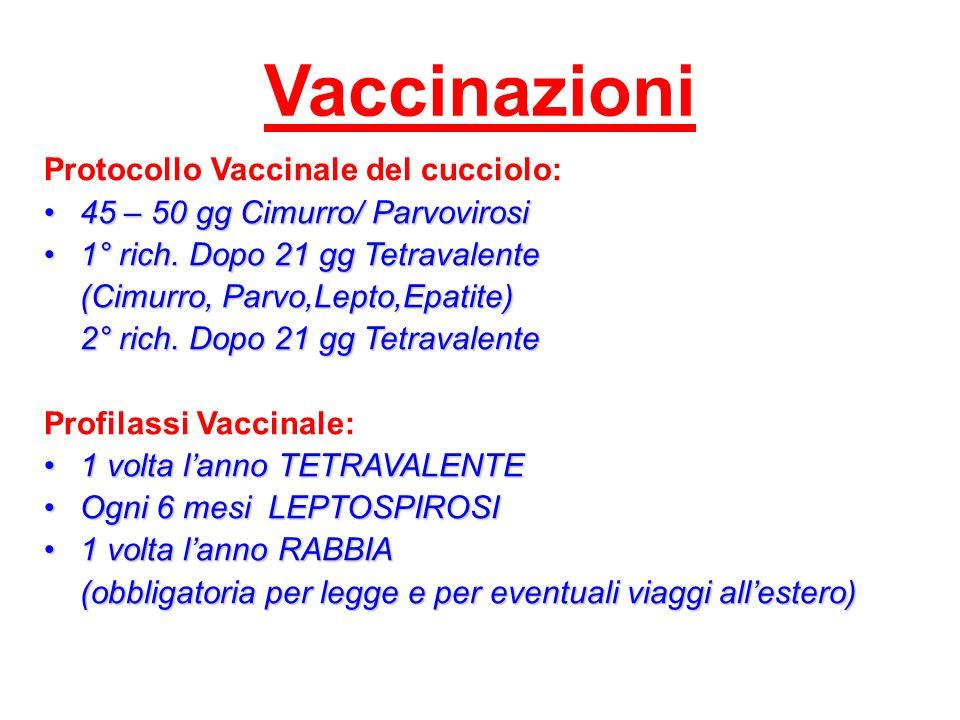 Vaccinazioni Protocollo Vaccinale del cucciolo: 45 – 50 gg Cimurro/ Parvovirosi45 – 50 gg Cimurro/ Parvovirosi 1° rich. Dopo 21 gg Tetravalente1° rich