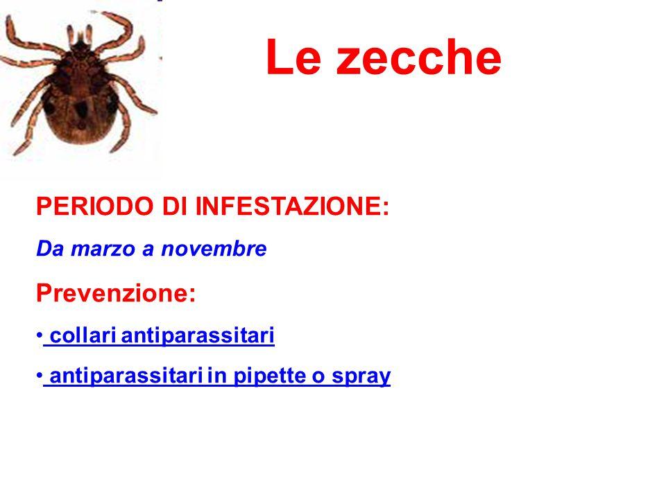 Le zecche PERIODO DI INFESTAZIONE: Da marzo a novembre Prevenzione: collari antiparassitari antiparassitari in pipette o spray