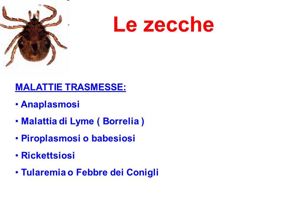 Le zecche MALATTIE TRASMESSE: Anaplasmosi Malattia di Lyme ( Borrelia ) Piroplasmosi o babesiosi Rickettsiosi Tularemia o Febbre dei Conigli