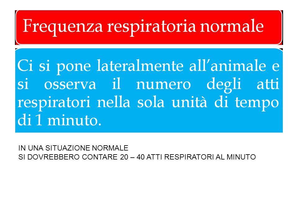IN UNA SITUAZIONE NORMALE SI DOVREBBERO CONTARE 20 – 40 ATTI RESPIRATORI AL MINUTO