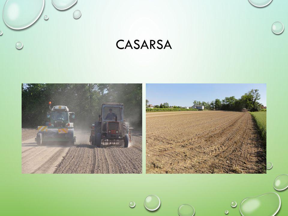CASARSA