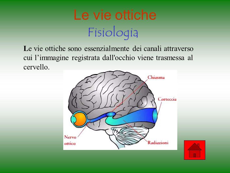 I muscoli dell'occhio Fisiologia Occhio sinistro Occhio destro Retto superiore superiore: verso l'alto Retto inferiore inferiore: verso il basso Retto