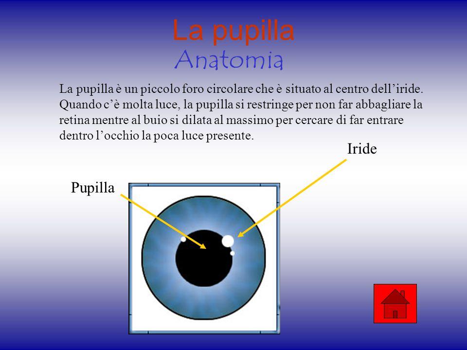 Il cristallino Anatomia Fisiologia Il cristallino è una lente contenuta nell occhio e situata subito dietro l iride.