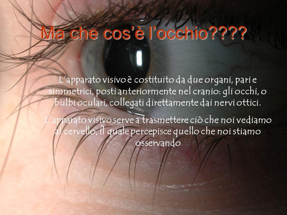 L' OCCHIO Presentazione della classe 3^F Anatomia e Fisiologia