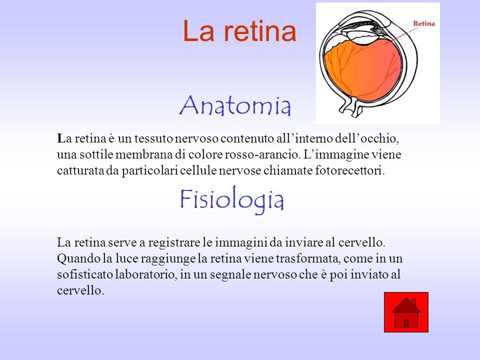 La coroide Anatomia Fisiologia La coroide è uno strato dell'occhio che si trova tra la retina e la sclera. E' costituita da una fittissima rete di vas