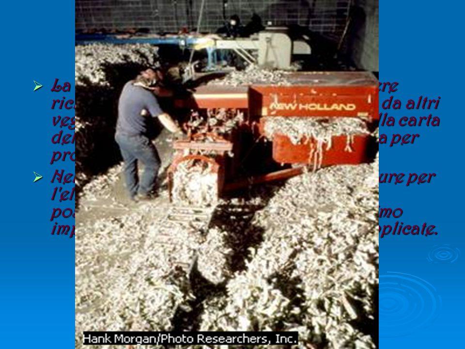  Carta  La carta, che è fatta di cellulosa, può essere riciclata: la cellulosa si estrae dal legno e da altri vegetali, in questo caso viene ricavata dalla carta della raccolta differenziata e la si riutilizza per produrre la carta riciclata.