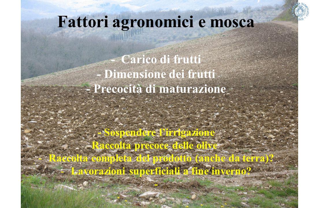 Fattori agronomici e mosca - Carico di frutti - Dimensione dei frutti - Precocità di maturazione - Sospendere l'irrigazione Raccolta precoce delle oli