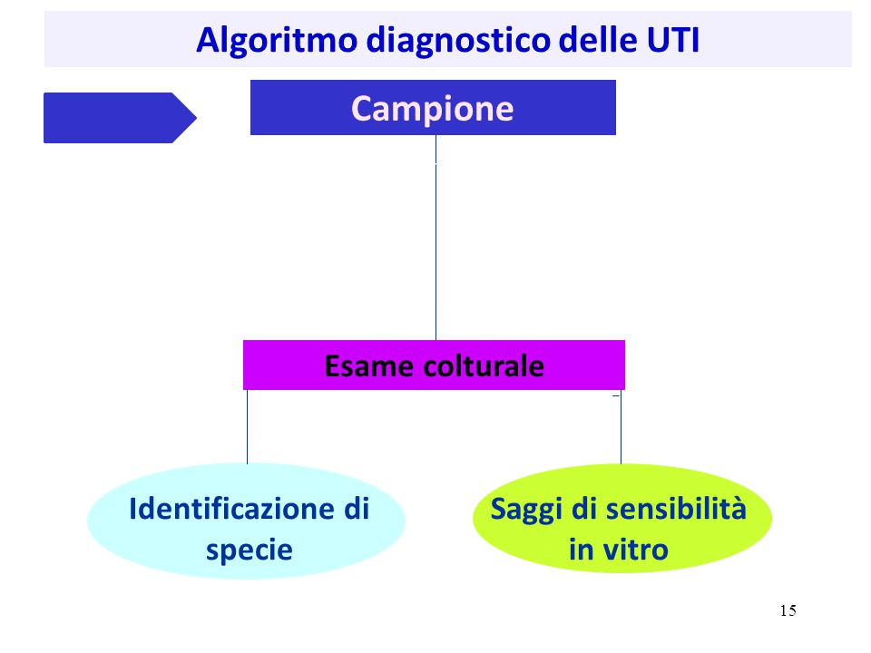 Campione Identificazione di specie Esame colturale Saggi di sensibilità in vitro Algoritmo diagnostico delle UTI www.bd.com/ 15