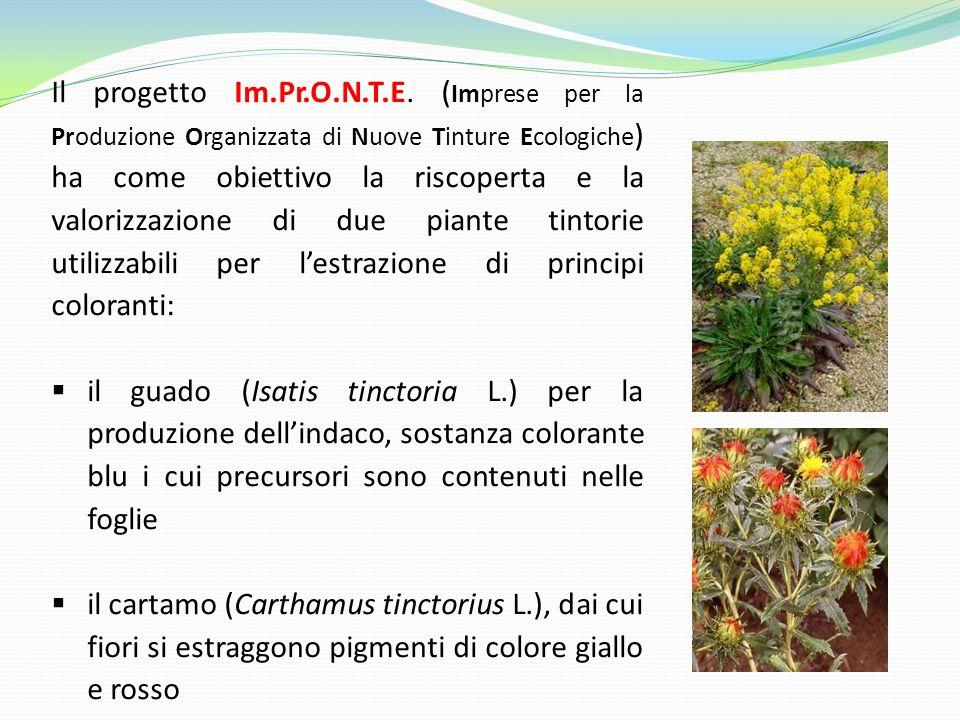 Il progetto Im.Pr.O.N.T.E. ( Imprese per la Produzione Organizzata di Nuove Tinture Ecologiche ) ha come obiettivo la riscoperta e la valorizzazione d