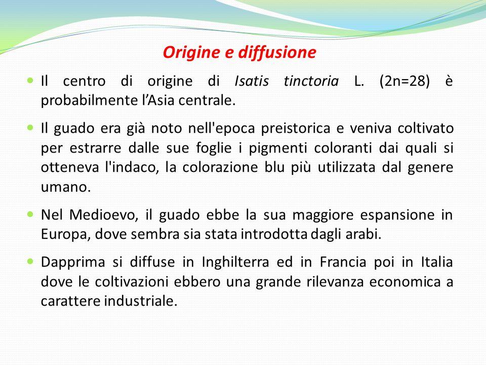 Origine e diffusione Il centro di origine di Isatis tinctoria L.