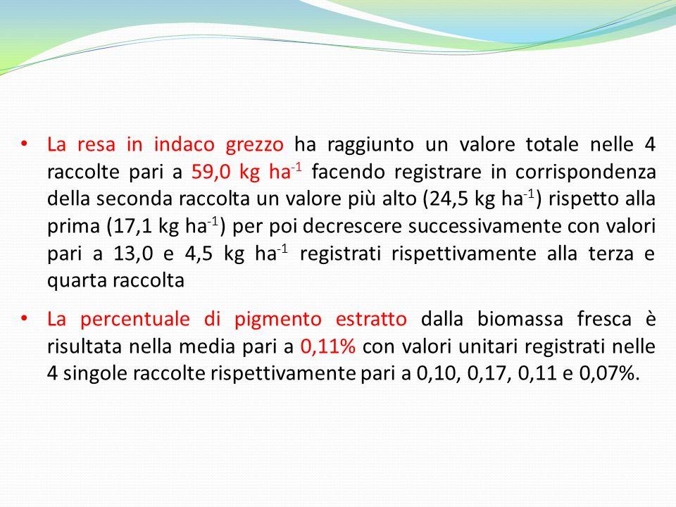 La resa in indaco grezzo ha raggiunto un valore totale nelle 4 raccolte pari a 59,0 kg ha -1 facendo registrare in corrispondenza della seconda raccolta un valore più alto (24,5 kg ha -1 ) rispetto alla prima (17,1 kg ha -1 ) per poi decrescere successivamente con valori pari a 13,0 e 4,5 kg ha -1 registrati rispettivamente alla terza e quarta raccolta La percentuale di pigmento estratto dalla biomassa fresca è risultata nella media pari a 0,11% con valori unitari registrati nelle 4 singole raccolte rispettivamente pari a 0,10, 0,17, 0,11 e 0,07%.
