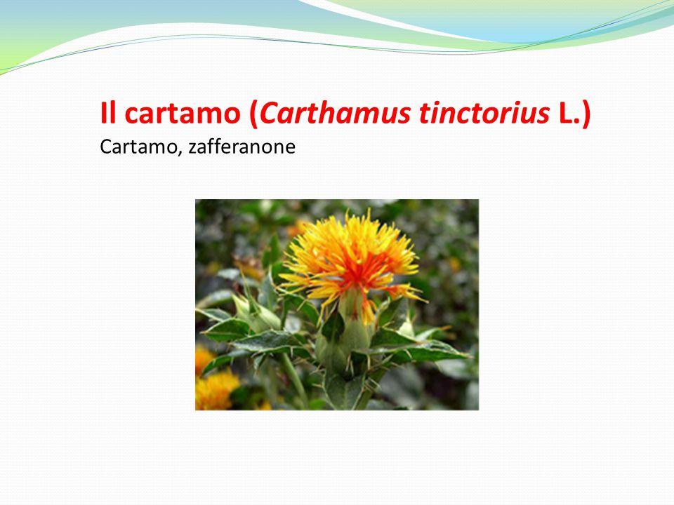 Il cartamo (Carthamus tinctorius L.) Cartamo, zafferanone