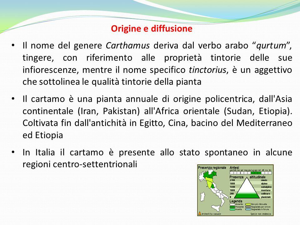 """Origine e diffusione Il nome del genere Carthamus deriva dal verbo arabo """"qurtum"""", tingere, con riferimento alle proprietà tintorie delle sue infiores"""
