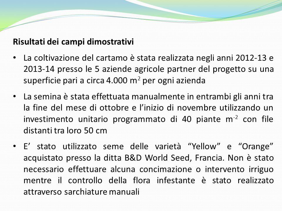 Risultati dei campi dimostrativi La coltivazione del cartamo è stata realizzata negli anni 2012-13 e 2013-14 presso le 5 aziende agricole partner del progetto su una superficie pari a circa 4.000 m 2 per ogni azienda La semina è stata effettuata manualmente in entrambi gli anni tra la fine del mese di ottobre e l'inizio di novembre utilizzando un investimento unitario programmato di 40 piante m -2 con file distanti tra loro 50 cm E' stato utilizzato seme delle varietà Yellow e Orange acquistato presso la ditta B&D World Seed, Francia.