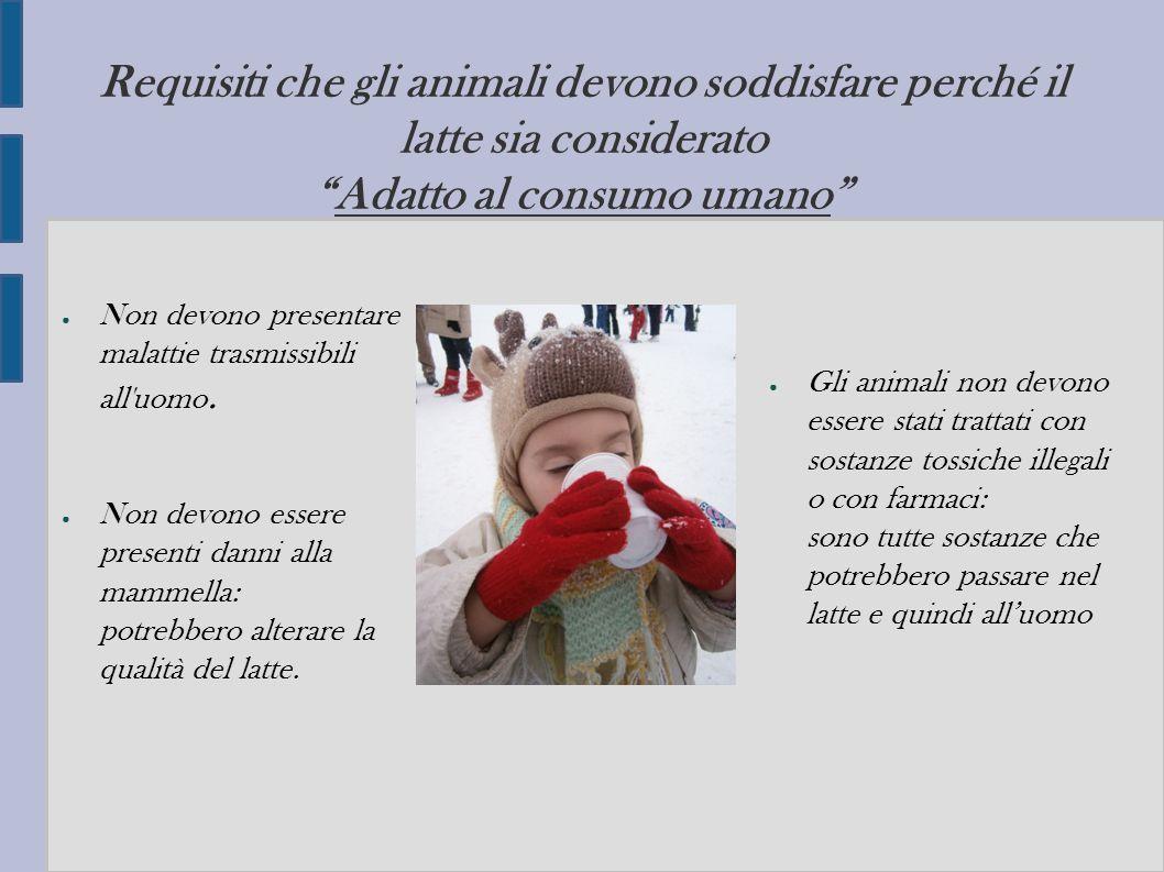 """Requisiti che gli animali devono soddisfare perché il latte sia considerato """"Adatto al consumo umano"""" ● Non devono presentare malattie trasmissibili a"""