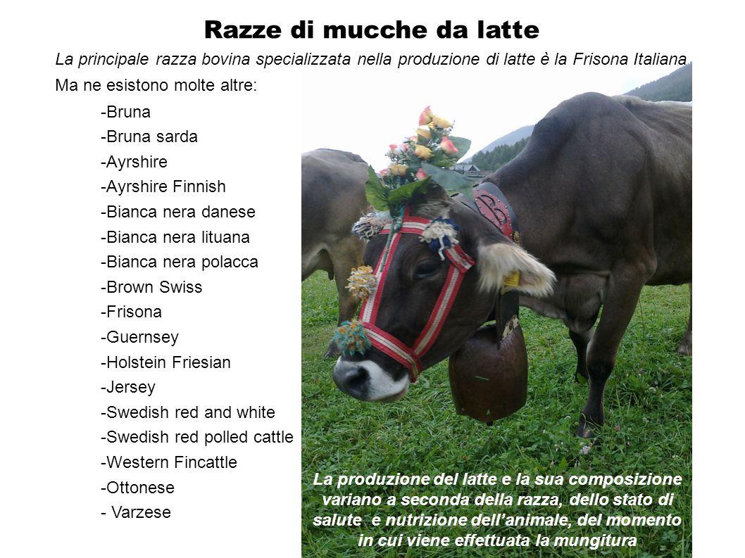Razze di mucche da latte -Bruna -Bruna sarda -Ayrshire -Ayrshire Finnish -Bianca nera danese -Bianca nera lituana -Bianca nera polacca -Brown Swiss -F