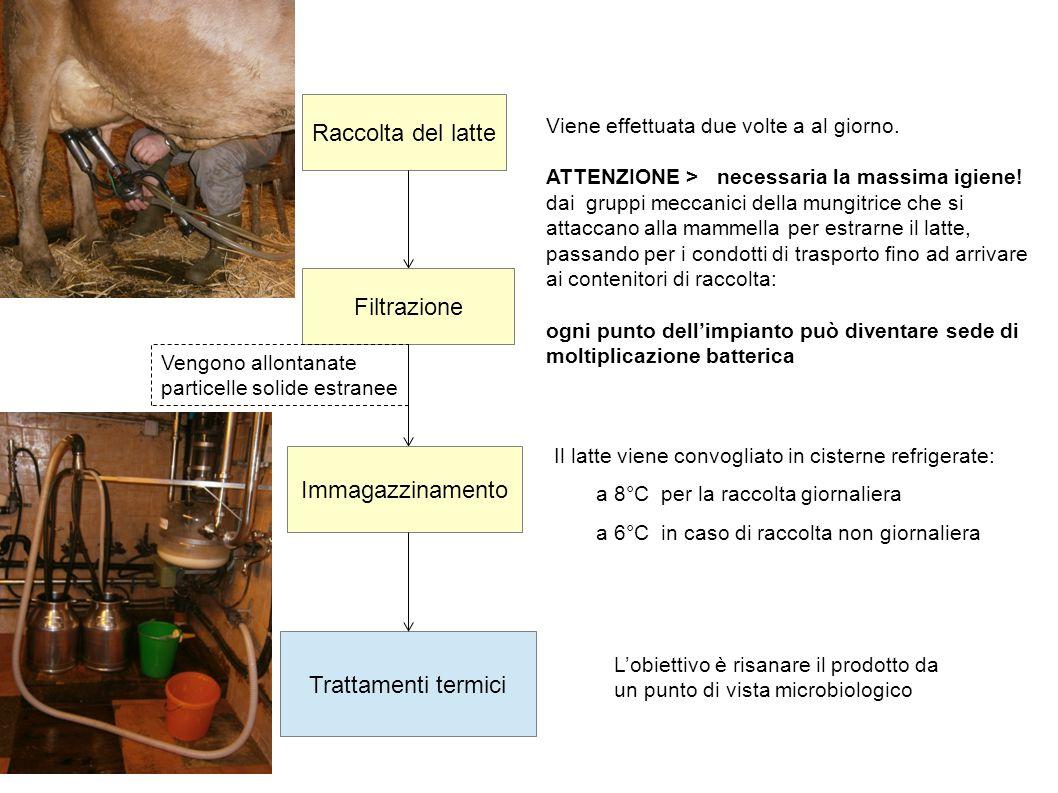 Pastorizzazione: un occhio alla storia La pastorizzazione è un trattamento termico che serve ad aumentare il tempo di conservazione di alcuni alimenti.